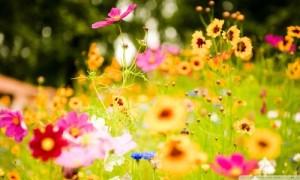 Humorous flowers
